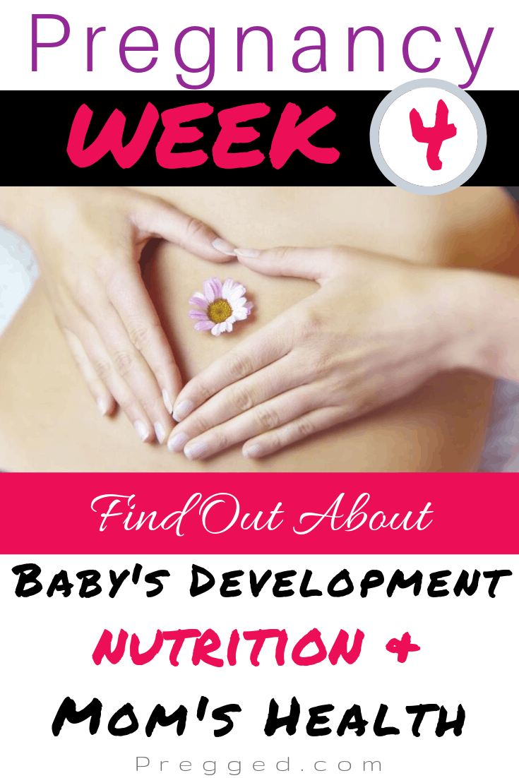 What's happening inside you when you're 4 Weeks pregnant? How is the fetus developing and what might you be experiencing? Also, do you know what to eat for a healthy pregnancy? Find out all about Week 4 of Pregnancy here. BY Obstetrician Dr Kim Langdon #pregnancy #weekbyweek #pregnancytips #pregnancy advice #pregnancydiet
