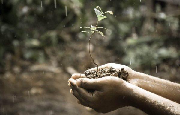 Eating Soil in Pregnancy – Healthy or Not?
